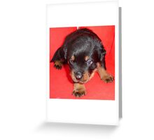 Young Rottweiler Puppy On A Red Background Greeting Card