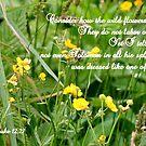The Flowers of the Field by Paula Tohline  Calhoun