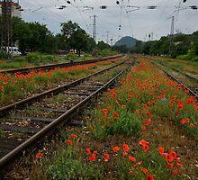 Unexpected Garden by Georgia Mizuleva
