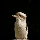 """Kookaburra"" on my fence by Toni McPherson"