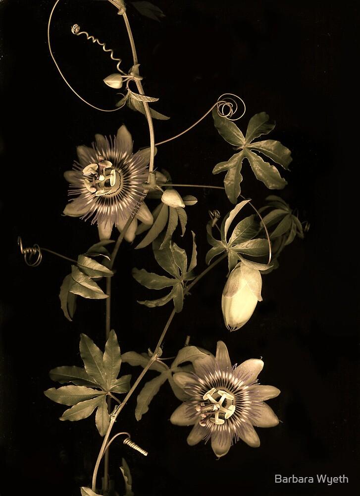 Passiflora Antique by Barbara Wyeth