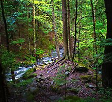 Late Day Forrest Light by Nazareth