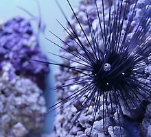 Marine Sea Urchin by AnnDixon