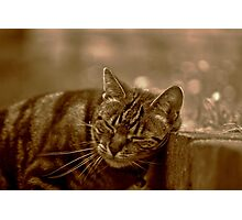 Purrfect Bliss Photographic Print