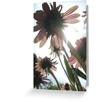 Cornflowers tothe sky Greeting Card