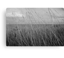 Flinders Grass Canvas Print