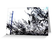 Parrot Silhouette - 11 07 12 Greeting Card