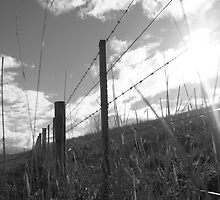 Flinders Fence 2 by Lauren Eagle