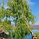 Weeping Willow by David Davies