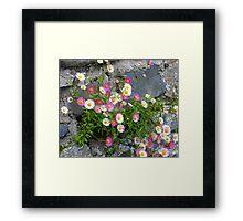 Daisies For Kate Framed Print