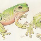 White's Tree Frog by BarbBarcikKeith