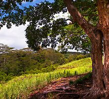 Invitation to Shadow Place. Chamarel. Mauritius by JennyRainbow