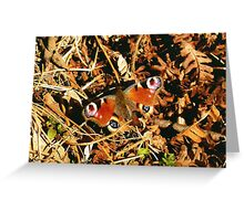 Amazing Butterfly Greeting Card