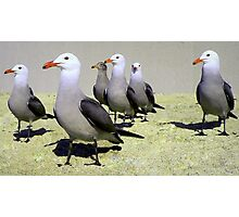 Seagulls at Attention, Except One Photographic Print