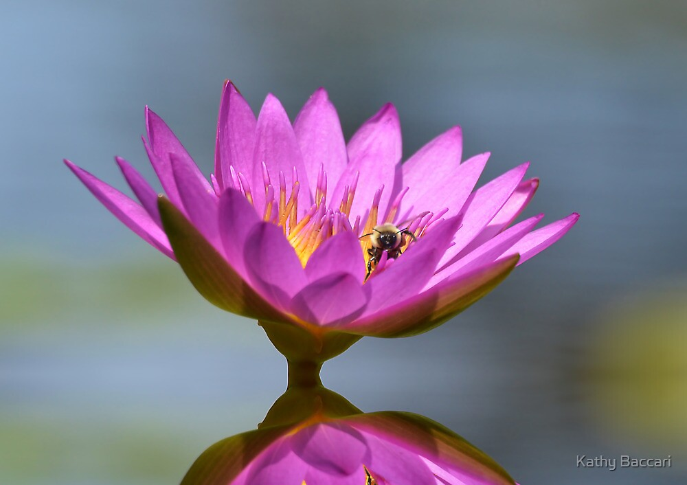 The Water Lily And The Bee by Kathy Baccari