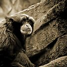 *Holleran Monkey* by DeeZ (D L Honeycutt)