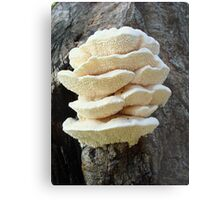 LOOKS LIKE COOKIES - A NEW SHELF FUNGUS FOR ME! Metal Print