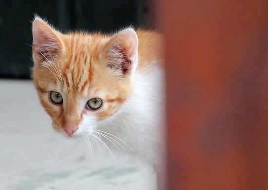 Little Fellow by vbk70