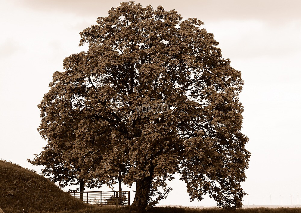Majestic Tree - Sepia by vbk70