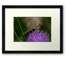 Wierd insect thingy. Framed Print
