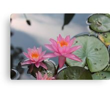 Water lilies, Kenilworth Aquatic Gardens Canvas Print
