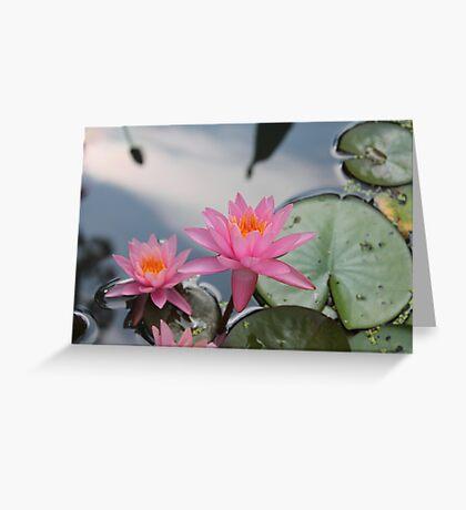 Water lilies, Kenilworth Aquatic Gardens Greeting Card