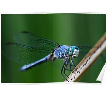 Happy Dragon Fly  Poster