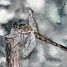 Dragonfly modern art print by derekmccrea
