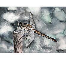 Dragonfly modern art print Photographic Print