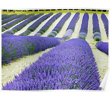 Lavender Rows Poster
