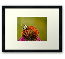 Lunch on the Cone Framed Print
