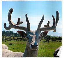 Yes, Deer Poster