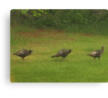 Turkey's In A Row         Pentax ( X-5 ) Digital Camera Canvas Print