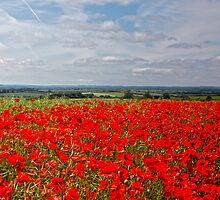 Poppy vista by Luke-Woods
