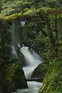 Secrets of the Forest _ New Zealand by Barbara Burkhardt