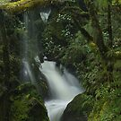 Secrets of the Forest _ New Zealand by Barbara Burkhardt