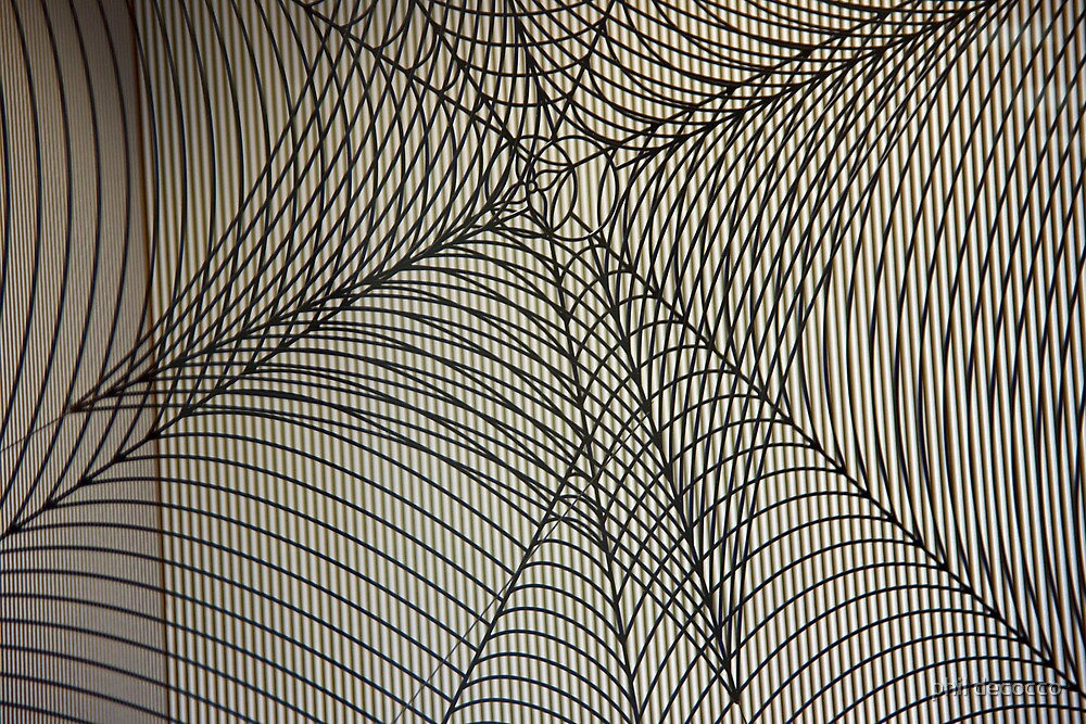 Spider Web by phil decocco