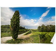 Vineyard in the italian countryside Poster