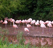In the pink .... by lezvee