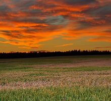 ELGIN - BUCCANEER SUNSET LANDSCAPE by JASPERIMAGE