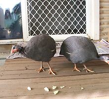 Guinea Fowl, young birds by Heather Dart