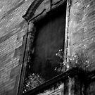 Window Box by Rowan Kanagarajah