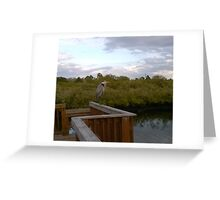 Great Blue Heron at Eagle Point Park, New Port Richey, FL Greeting Card