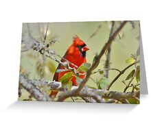 All Dressed In Red Greeting Card