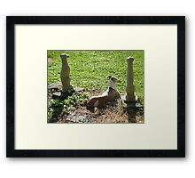 Among the Ruins Framed Print
