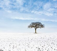 Winter on Old Hill by MikeBarber