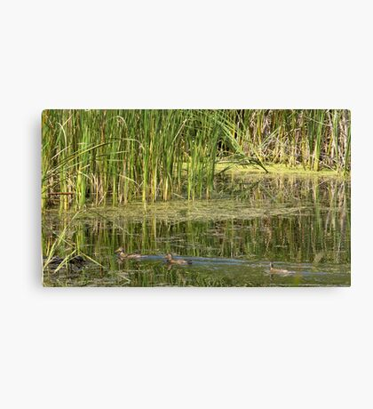 wild ducks Canvas Print