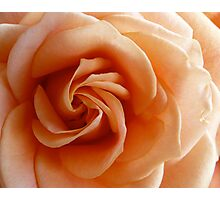 Peach Rose - 4:5 Photographic Print