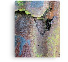 Web & Decay Canvas Print