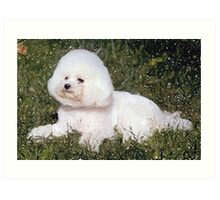 Bichon Frise Dog Portrait Art Print